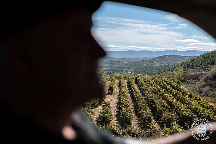 Conduciendo entre viñedos en Rioja Alavesa