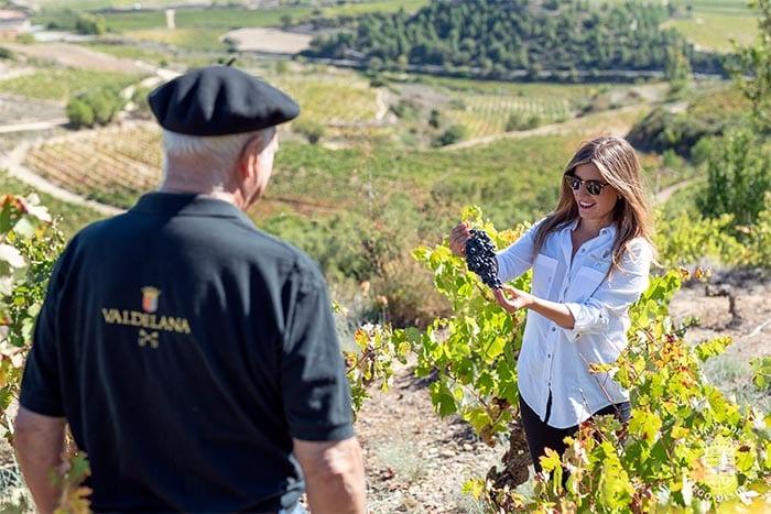 Centvm Vitis es una de las viñas más especiales de Bodegas Valdelana, una viña que sobrevivió a la filoxera. Judit e Isidoro la visitan