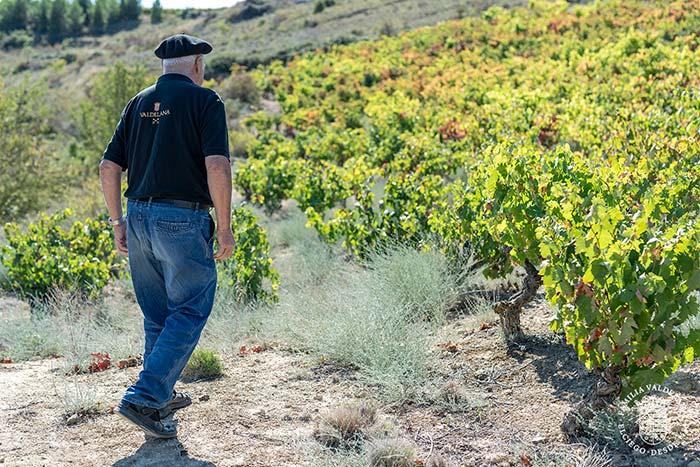 Isidoro visita la viña de Centvm Vitis, nuestro viña que sobrevivió a la filoxera (Elciego, Rioja Alavesa)