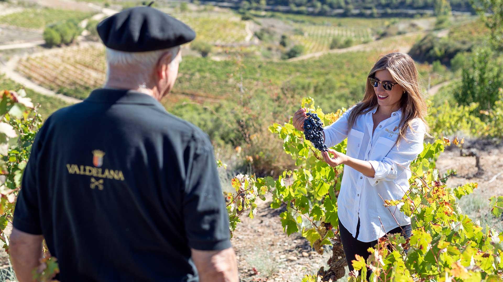 Centvm Vitis - El vino de origen prefiloxérico (portada)