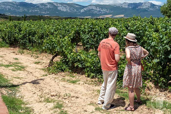 Una pareja de enoturistas disfruta de los viñedos de Rioja Alavesa.